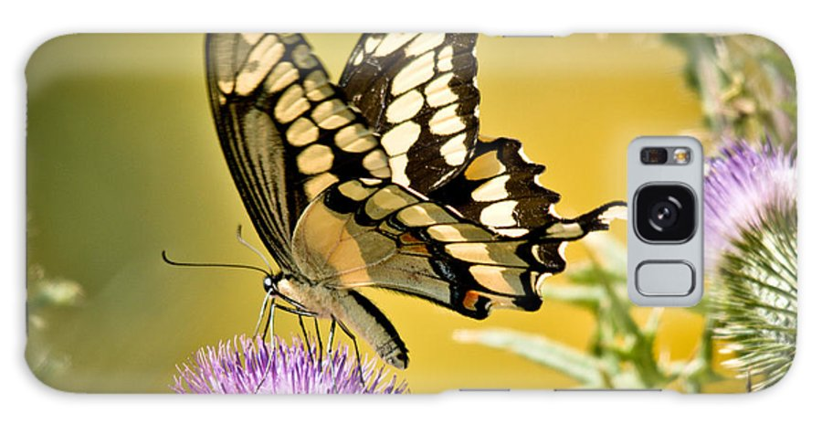 Galaxy S8 Case featuring the photograph Giant Swallowtail On Thistle by Cheryl Baxter