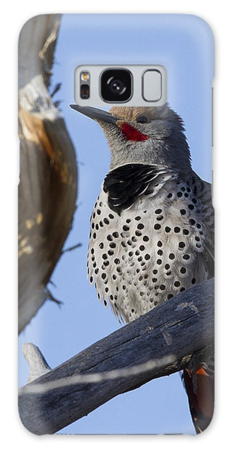 Gilded Flicker Galaxy S8 Case featuring the photograph Gilded Flicker by Elaine Haberland