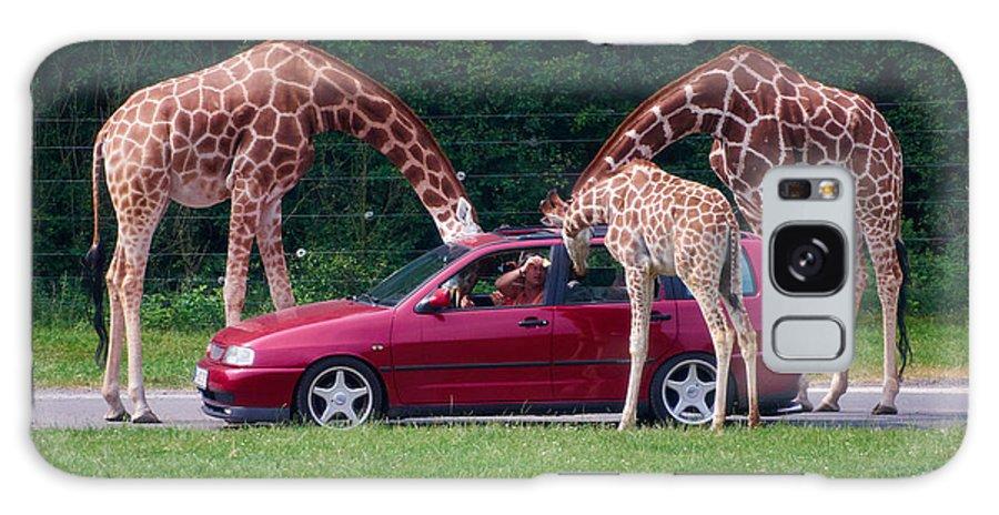 Alankomaat Galaxy S8 Case featuring the photograph Giraffe. Animal Studies by Jouko Lehto