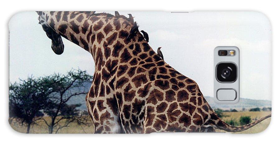 Giraffe In Tanzania Galaxy S8 Case featuring the photograph Giraffe by Marida Lin