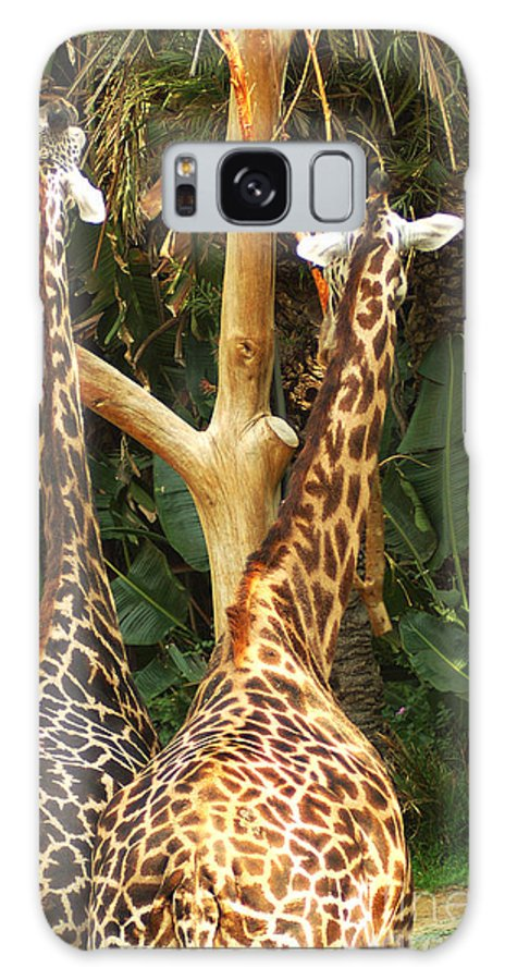 Hungry Galaxy S8 Case featuring the photograph Giraffes In Love by Micah May