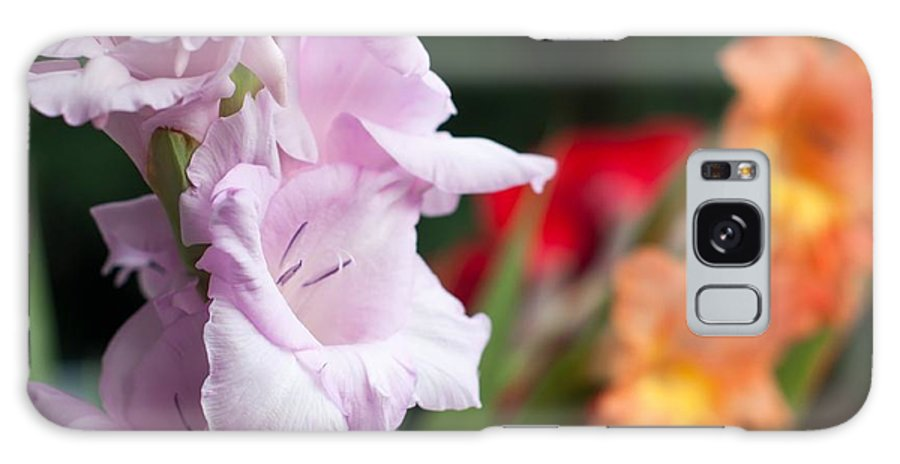 Gladiolus Galaxy S8 Case featuring the photograph Gladiolus Bouquet by Frank Gaertner
