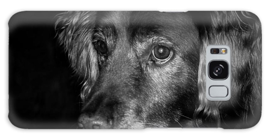 Dog Galaxy S8 Case featuring the photograph Gleaming Eyes by Timothy Shea
