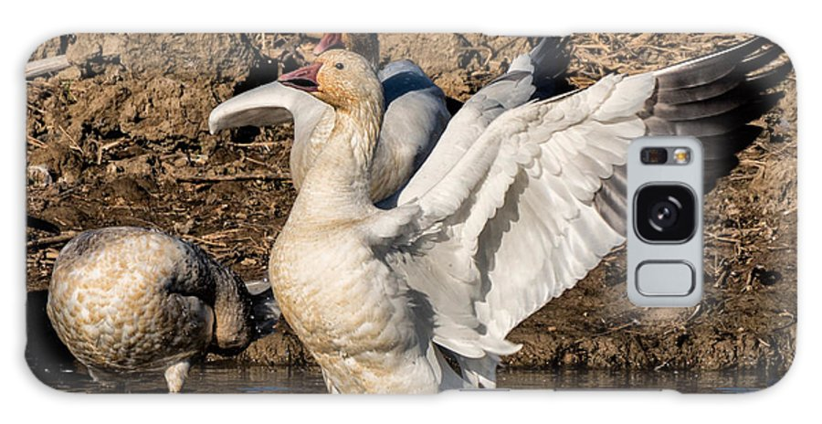 Nature Galaxy S8 Case featuring the photograph Glorious Snow Goose by Kathleen Bishop