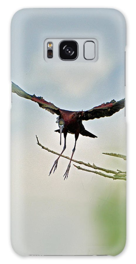 Bird Galaxy S8 Case featuring the photograph Glossy Ibis Landing by Paul Weiss