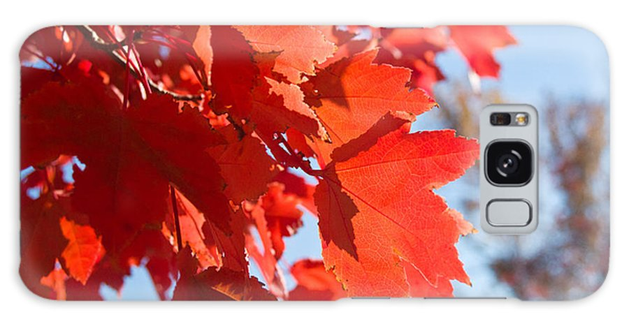 Glowing Galaxy S8 Case featuring the photograph Glowing Fall Maple Colors 4 by Douglas Barnett