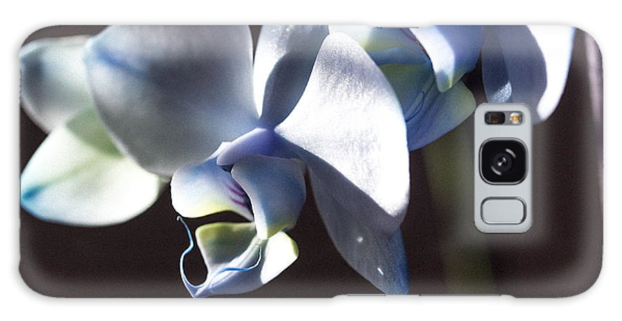 Blue Orchids Galaxy S8 Case featuring the photograph God's Light by Sheree Lauth