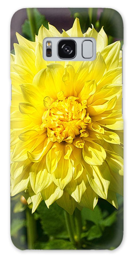 Gold Waterlily Dahlia Galaxy S8 Case featuring the photograph Gold Waterlily Dahlia by Thomas J Rhodes