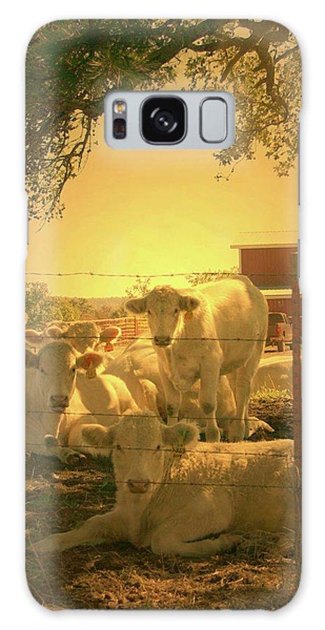 Cow Galaxy S8 Case featuring the photograph Golden Cows by Nina Fosdick