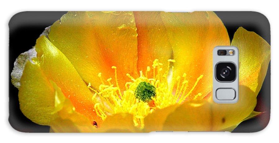 Desert Flower Galaxy S8 Case featuring the photograph Golden Desert Flower by Carol Groenen