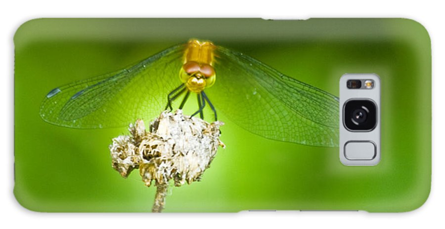 Dragonfly Photographs Galaxy S8 Case featuring the photograph Golden Dragonfly On Perch by Crystal Heitzman Renskers