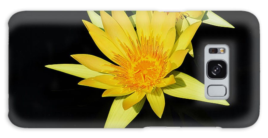 Lily Galaxy S8 Case featuring the photograph Golden Lily by Roger Becker