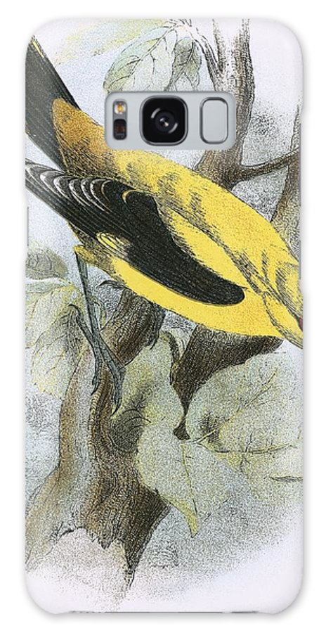 British Birds Galaxy S8 Case featuring the painting Golden Oriole by English School