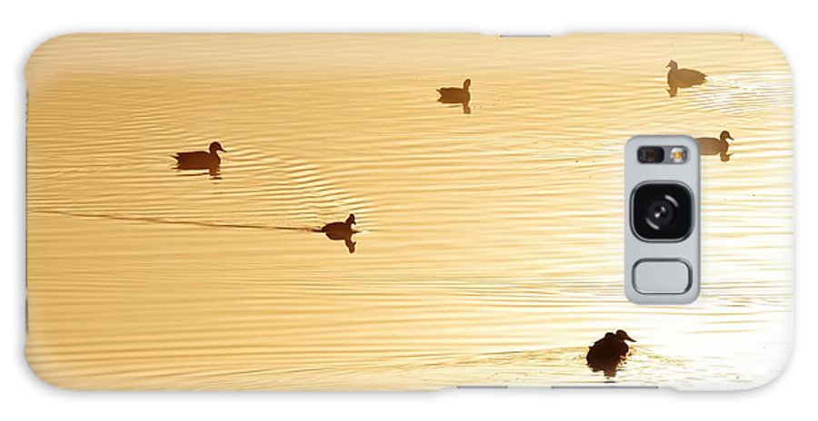Ducks; Swimming; Pond; Golden; Morning Light; Birds; Early; Fog; Background; Fence; Swartland; South Africa; Galaxy S8 Case featuring the photograph Golden Pond by Werner Lehmann