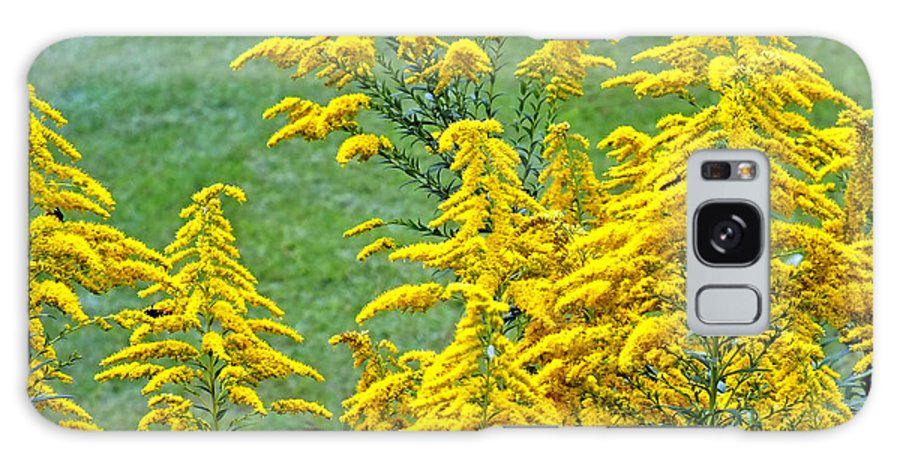 Duane Mccullough Galaxy S8 Case featuring the photograph Goldenrod Flowers by Duane McCullough