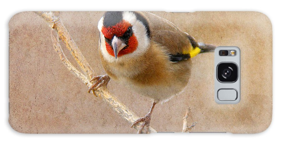 Carduelis Carduelis Galaxy S8 Case featuring the photograph Goldfinch Male Carduelis Carduelis by Perry Van Munster