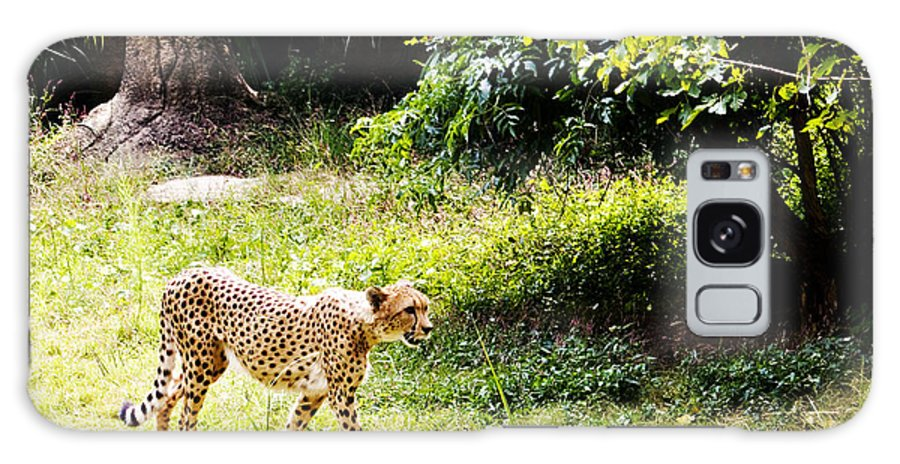 Cheetah Galaxy S8 Case featuring the photograph Gone In 3 Seconds 1 by Walter Herrit