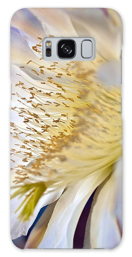 Hildmann's Cereus Galaxy S8 Case featuring the photograph Good Morning Sun by Elaine Snyder