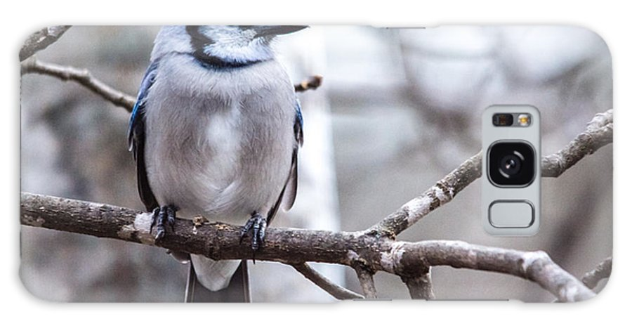 Galaxy S8 Case featuring the photograph Gorgeous Blue Jay by Cheryl Baxter
