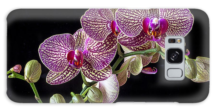 Gorgeous Beautiful Galaxy S8 Case featuring the photograph Gorgeous Orchids by Garry Gay