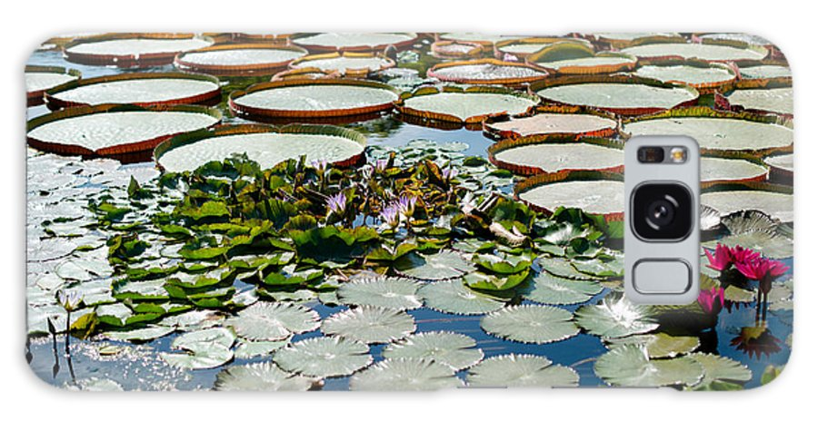 Water Lily Galaxy S8 Case featuring the photograph Gorgeous Water Lilies by Frank Gaertner