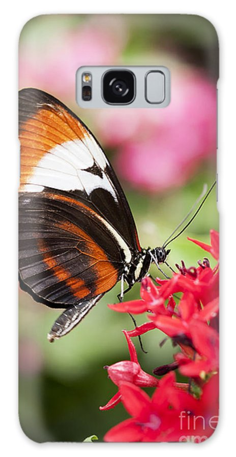 Butterfly Galaxy S8 Case featuring the photograph Grace by Patty Colabuono