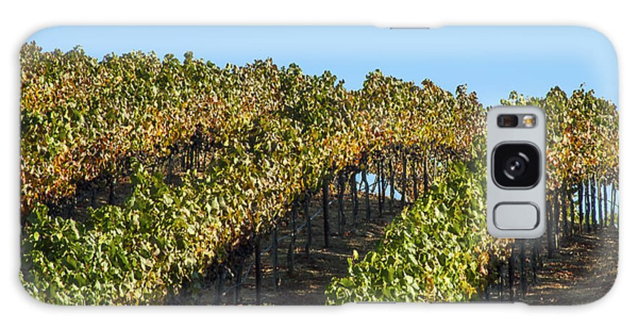 Napa Valley California Wineries Winery Grapevine Grapevines Row Rows Landscape Landscapes Plant Plants Vineyard Vineyards Galaxy S8 Case featuring the photograph Grapevines by Bob Phillips