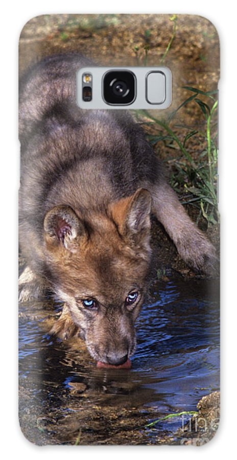 Gray Wolf Galaxy S8 Case featuring the photograph Gray Wolf Pup Endangered Species Wildlife Rescue by Dave Welling