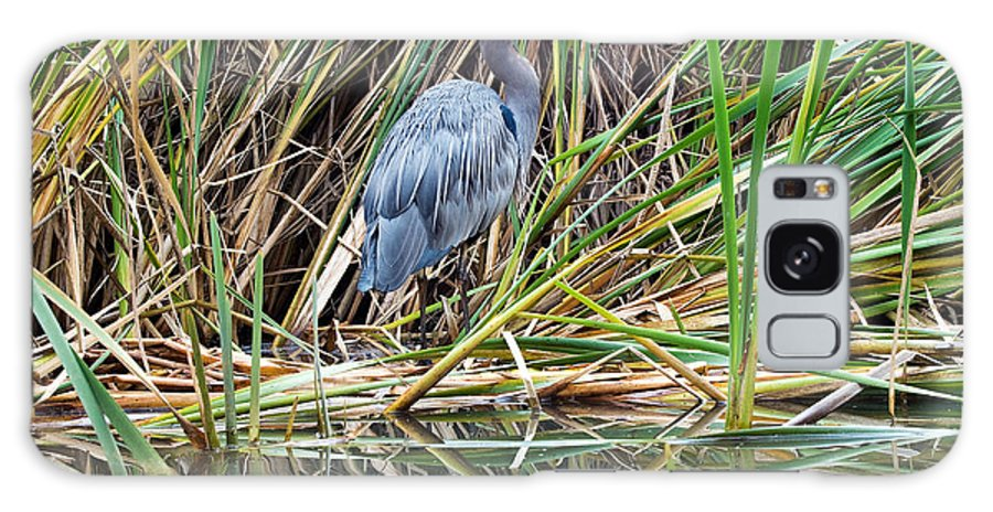 Great Blue Heron Galaxy S8 Case featuring the photograph Great Blue Heron 9 by Terry Elniski