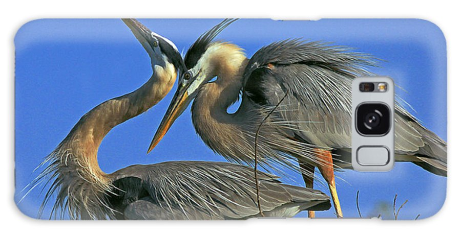 Great Blue Heron Galaxy S8 Case featuring the photograph Great Blue Heron Courting Pair by Larry Nieland
