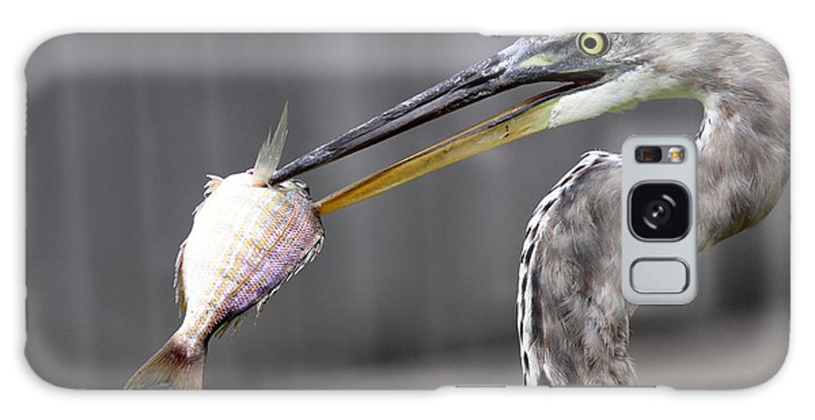 Fred Galaxy S8 Case featuring the photograph Great Blue Heron - Just Fred by Travis Truelove