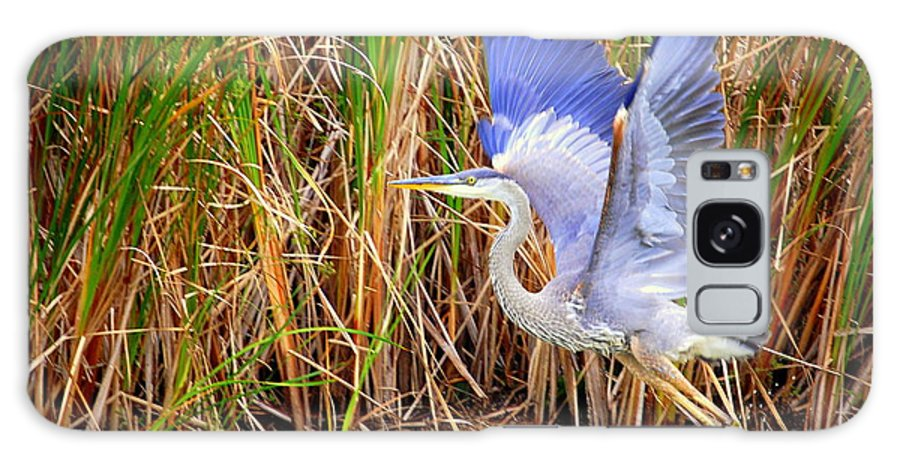 Blue Heron Galaxy S8 Case featuring the photograph Great Blue Heron Lift Off by Linda Rae Cuthbertson