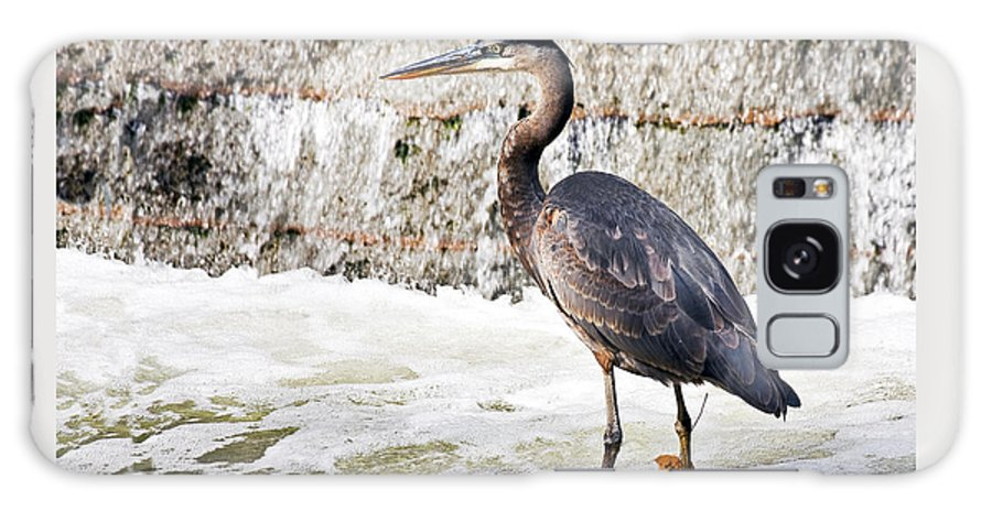 Animal Galaxy S8 Case featuring the photograph Great Blue Heron by Marcia Colelli