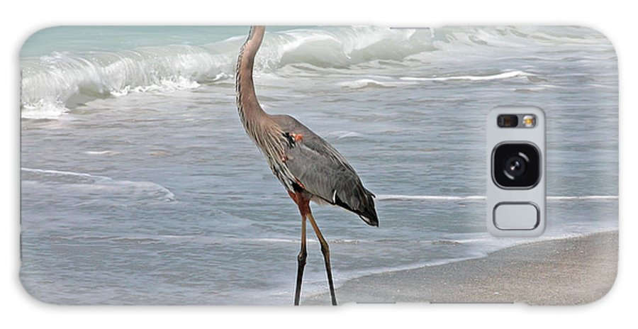 Fauna Galaxy S8 Case featuring the photograph Great Blue Heron On Beach by Mariarosa Rockefeller