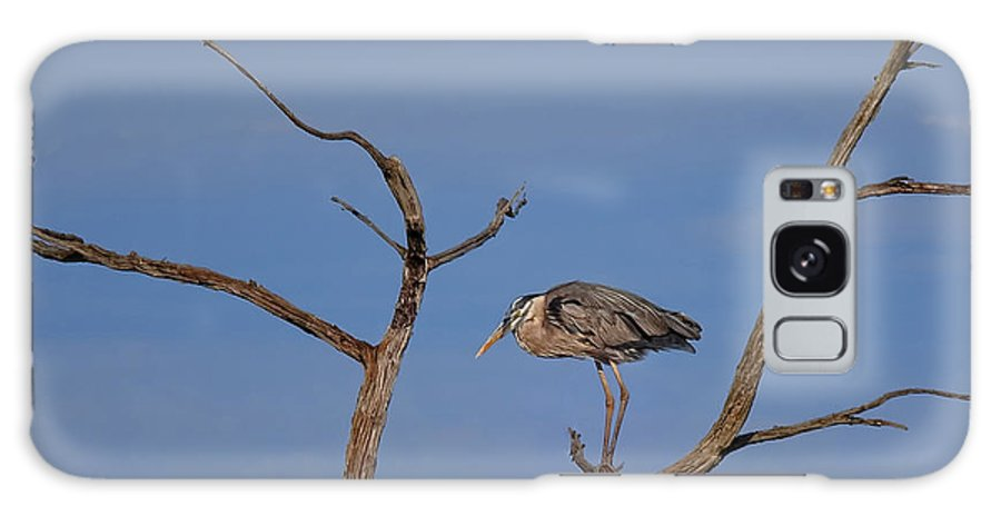 Great Blue Galaxy S8 Case featuring the photograph Great Blue Heron Perched On Branch by Timothy Flanigan