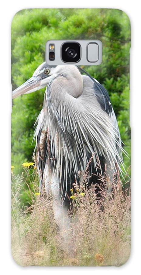 Photographs Galaxy S8 Case featuring the photograph Great Blue Heron Watching And Waiting by Brian Chase