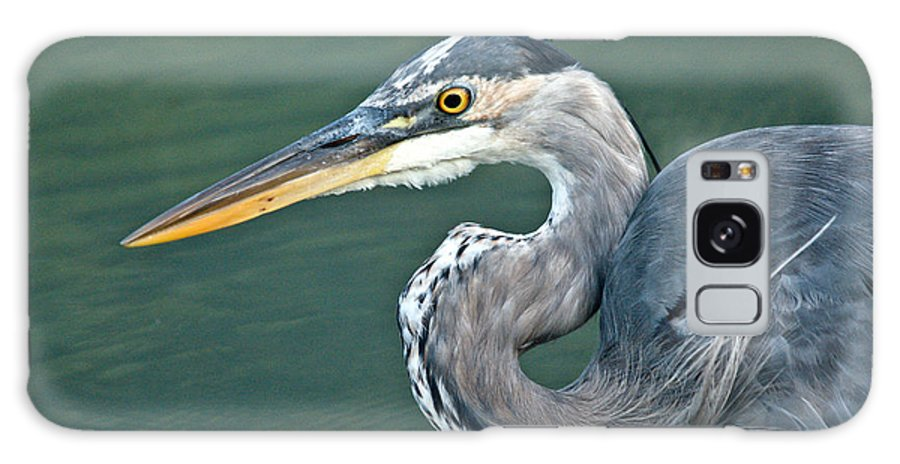 Galaxy S8 Case featuring the photograph Great Blue Profile by Cheryl Baxter