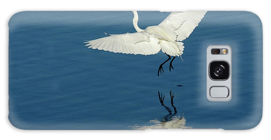 Egret Galaxy S8 Case featuring the photograph Great Egret Landing by Bob Christopher