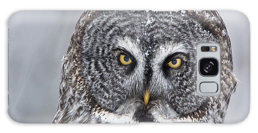 Nis Galaxy S8 Case featuring the photograph Great Gray Owl Scowl Minnesota by Benjamin Olson