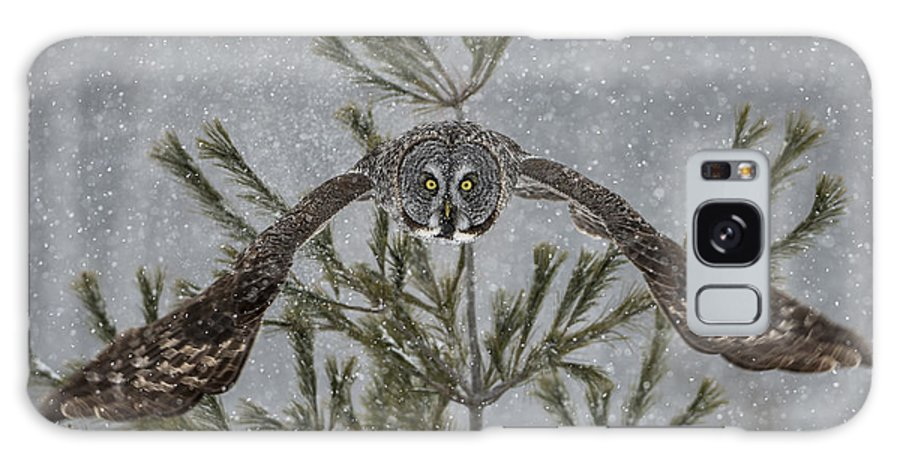 Great Grey Owl Galaxy S8 Case featuring the photograph Great Grey Owl Pictures 16 by Owl Images