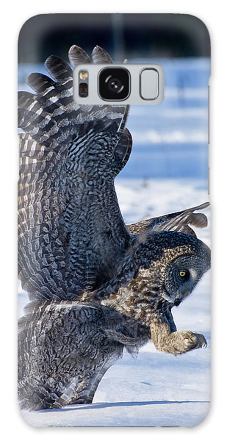 Great Grey Owl Galaxy S8 Case featuring the photograph Great Grey Owl Pictures 31 by Owl Images