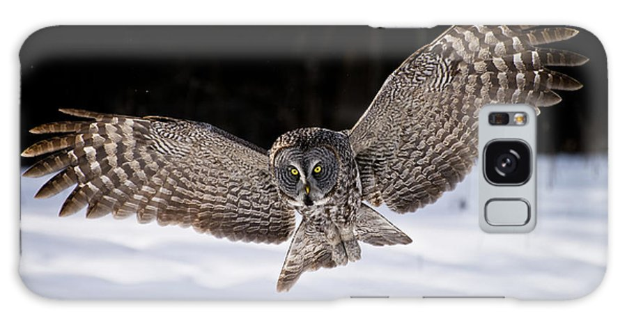 Great Grey Owl Galaxy S8 Case featuring the photograph Great Grey Owl Pictures 36 by Owl Images
