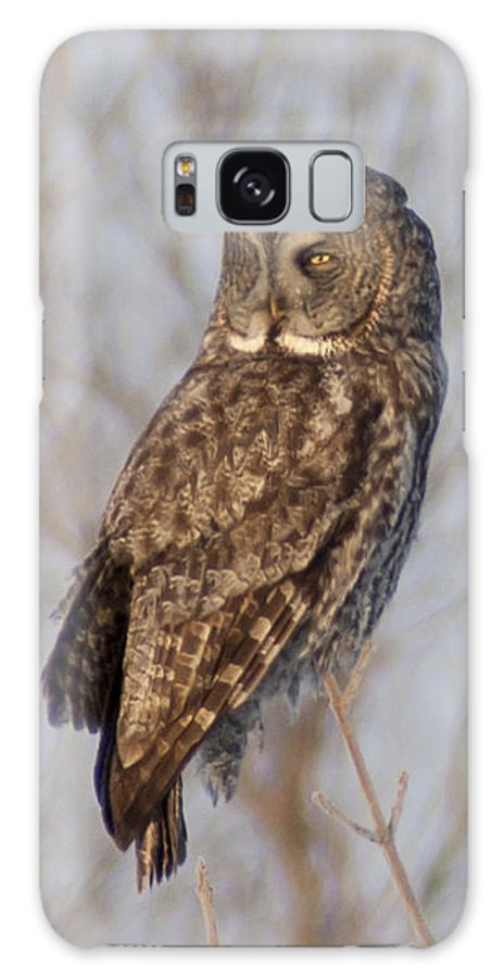 Bird Galaxy S8 Case featuring the photograph Great Grey Owl by Richard Kitchen