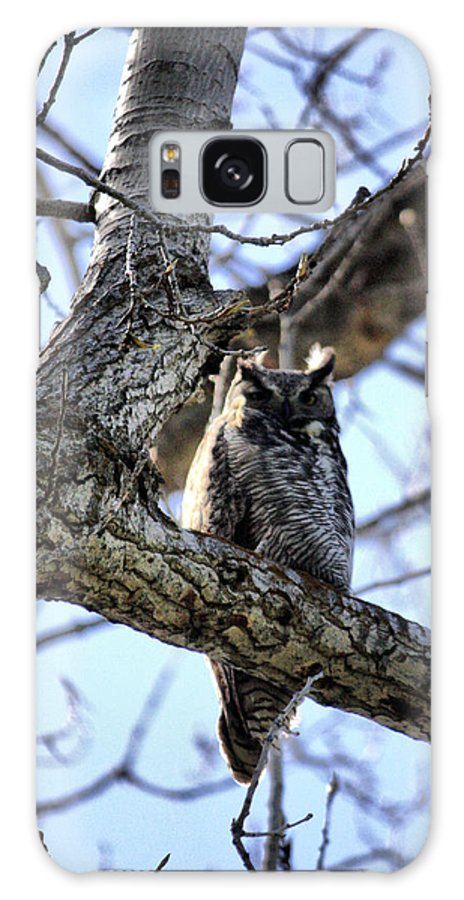 Oregon Galaxy S8 Case featuring the photograph Great Horned Owl by Ray Finch