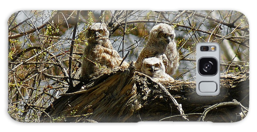 Birds Galaxy S8 Case featuring the photograph Great Horned Owlets Photo by Ernie Echols