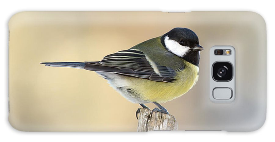 Great Tit Galaxy S8 Case featuring the photograph Great Tit by Torbjorn Swenelius