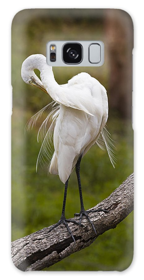 Bird Galaxy S8 Case featuring the photograph Great White Egret by Chad Davis