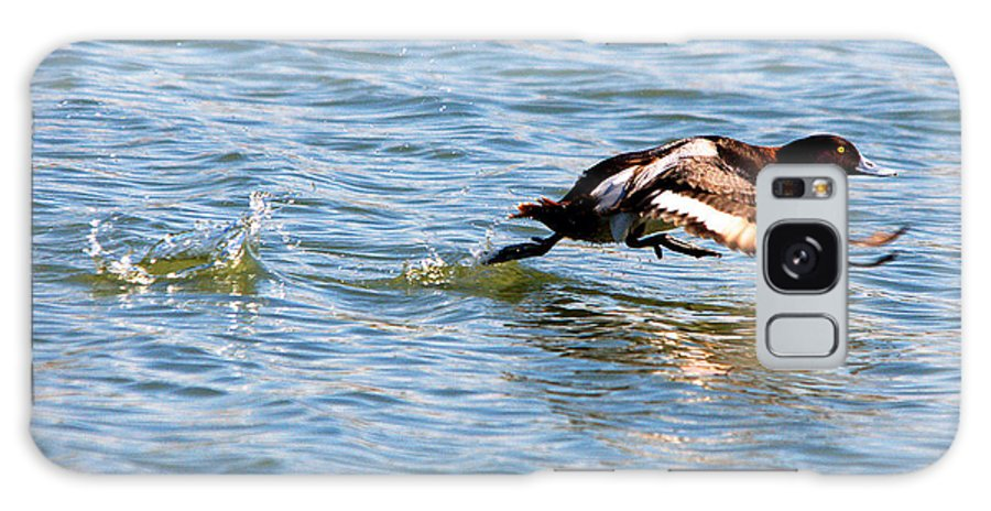 Duck Galaxy S8 Case featuring the photograph Greater Scaup Takes Flight by Roy Williams