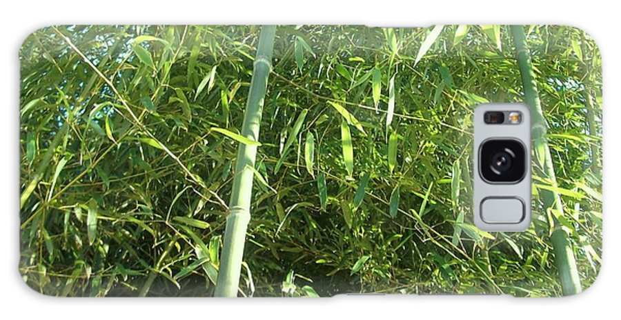 This Is A Photo Of Vibrant Green Bamboo Stalks Which Can Inspire One To Be Energetic Throughout The Day. Galaxy S8 Case featuring the photograph Green Bamboo by Michelle Caraballo