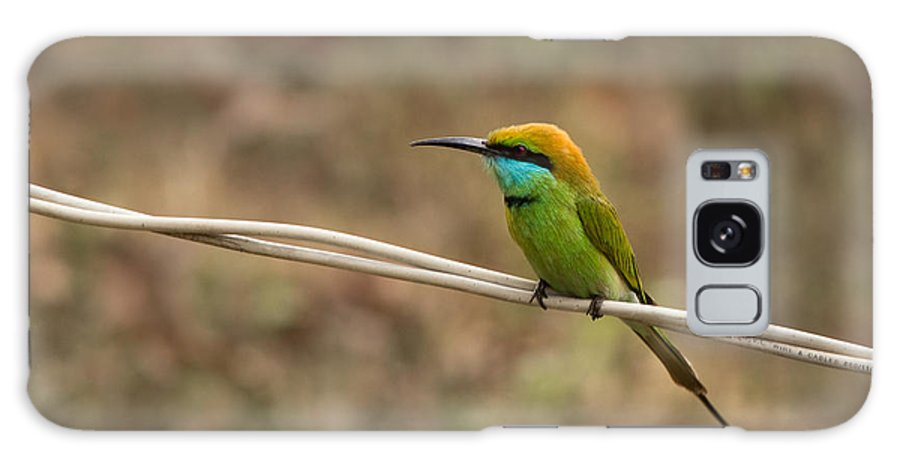Green Bee-eater Galaxy S8 Case featuring the photograph Green Bee-eater by Saurav Pandey